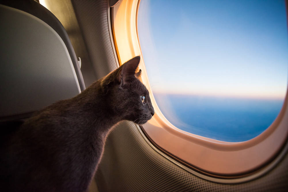 Ya puedes viajar con tus animales en avión