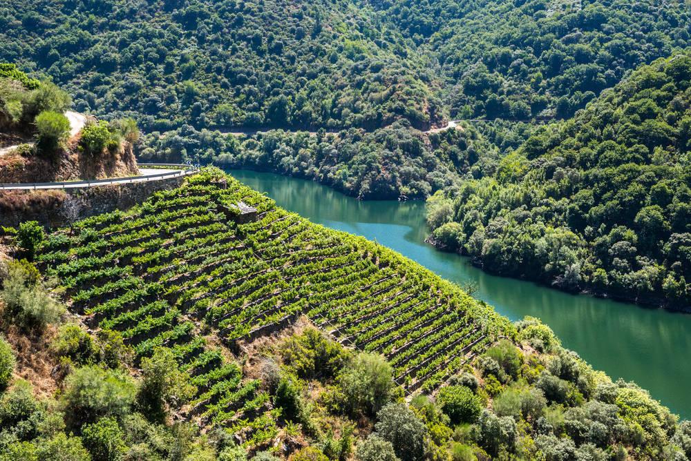 Los vinos de España, un buen detalle para regalar en un evento importante